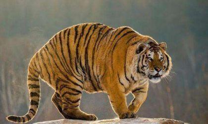 属虎的人今年多大 2020年属虎的几岁