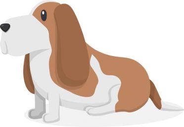 属狗的今年多大2021 属狗的人2021年几岁了