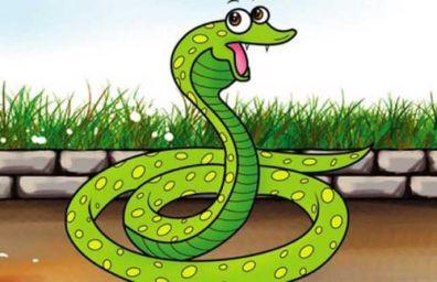 属蛇的今年多少岁了 2021年属蛇年龄对照表
