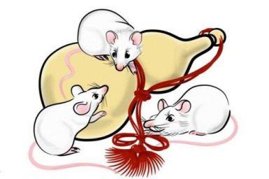 2008年属鼠的人命运 2008年属鼠的是什么命