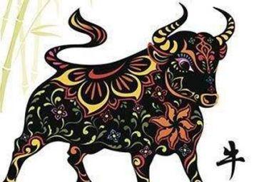 1949年属牛的人命运 1949年属牛的是什么命