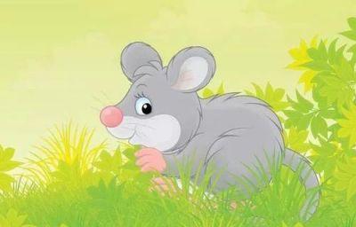 1996年属鼠的人命运 1996年属鼠的是什么命