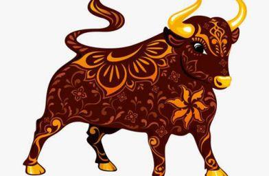 1997年属牛的人命运 1997年属牛的是什么命