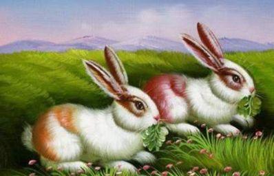 1999年属兔的人命运 1999年属兔的是什么命