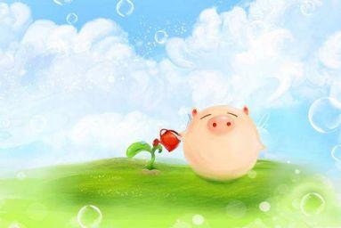 属猪五行属什么命 不同年份属猪五行属什么